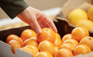 negocio zumos fruta naturales